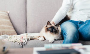Siamese Cat Laying on Couch with Owner - Gary's Vacuflo for New Construction