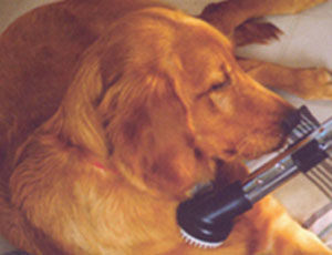 Gary's Vacuflo Tool Helping Clean Up Shedding Dog - Pet Tools
